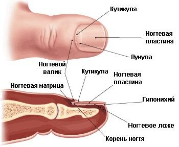 mikoz-bolshih-skladok-lechenie